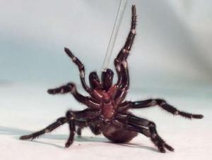 Spider + flamethrower = hopsital!